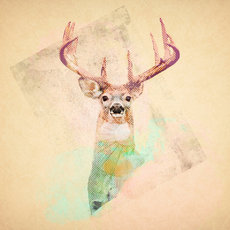 Game prints  deer by jskit d45yqzu
