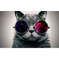 6904647 cool cat hd wallpapers widescreen