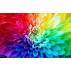 F4cb6ad1ruyada renklerin anlami cesitli renkler gormek