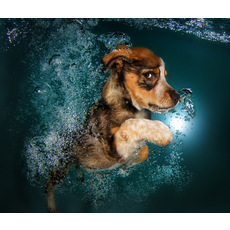 Adorable puppies swimming underwater 4