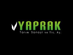 Yaprak3