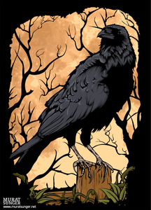 Crow by muratsunger