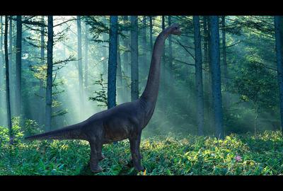 Dinoold